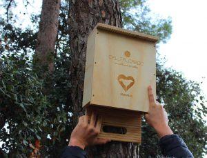 Caja refugio para murciélagos. Celler Credo